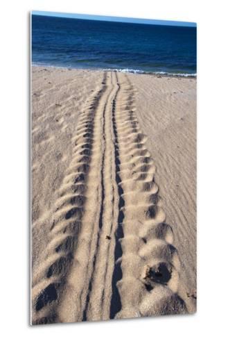 Giant Turtle Tracks in the Sand-Paul Souders-Metal Print