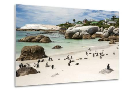 African Penguins on Sand at Foxy Beach with Residential Homes in Background-Kimberly Walker-Metal Print