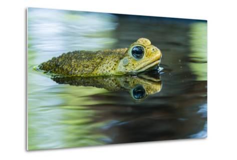 Cane Toad-Gary Carter-Metal Print