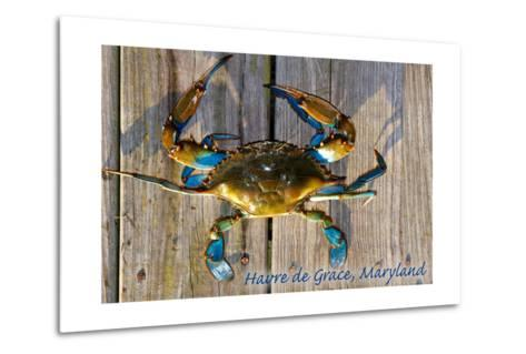 Harve De Grace, Maryland - Blue Crab on Dock-Lantern Press-Metal Print