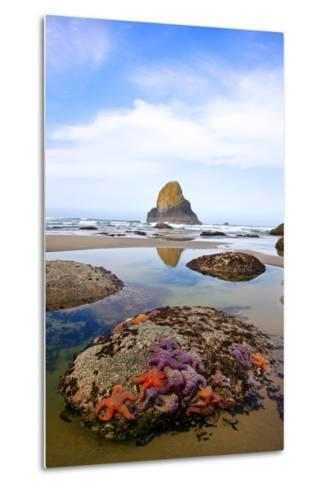 Starfish and Rock Formations along Indian Beach, Oregon Coast-Craig Tuttle-Metal Print