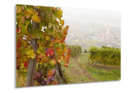 Vineyards Above Spitz an Der Danau, Wachau, Austria, Europe-Miles Ertman-Metal Print