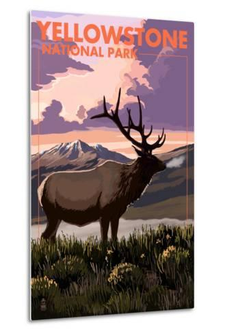 Yellowstone National Park - Elk and Sunset-Lantern Press-Metal Print