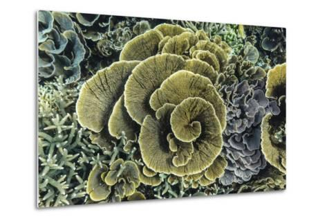 A Profusion of Hard and Soft Coral Underwater on Siaba Kecil-Michael Nolan-Metal Print
