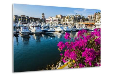 Colourful Flowers in the Harbour of Los Cabos, Baja California, Mexico, North America-Michael Runkel-Metal Print