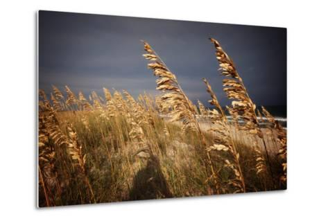 Dune Grasses in Cape Hatteras in North Carolina-Chris Bickford-Metal Print