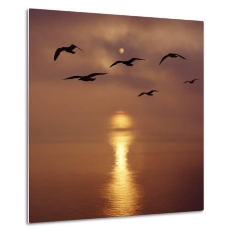 Sunrise over the Sea with Seagulls, UK-Mark Taylor-Metal Print