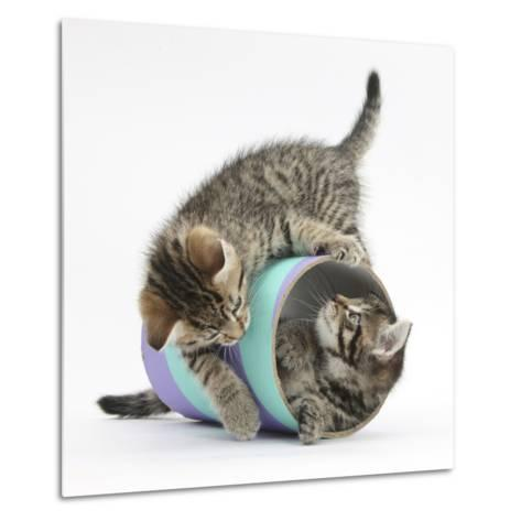 Two Cute Tabby Kittens, Stanley and Fosset, 7 Weeks, Playing with a Tube-Mark Taylor-Metal Print