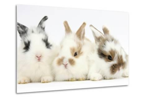 Three Cute Baby Bunnies Sitting Together-Mark Taylor-Metal Print