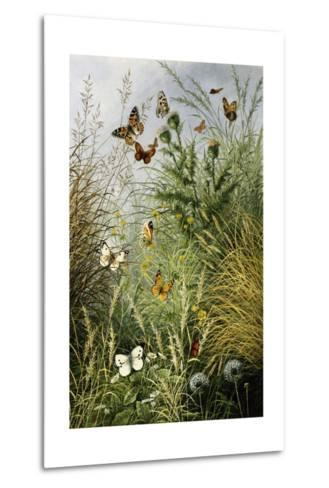 The Butterflies' Haunt (Dandelion Clocks and Thistles)-William Scott Myles-Metal Print