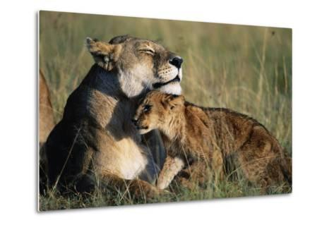 Lioness and Cub Resting on the Savanna--Metal Print