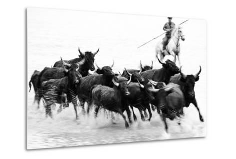 Black Bulls of Camargue and their Herder Running Through the Water, Camargue, France-Nadia Isakova-Metal Print