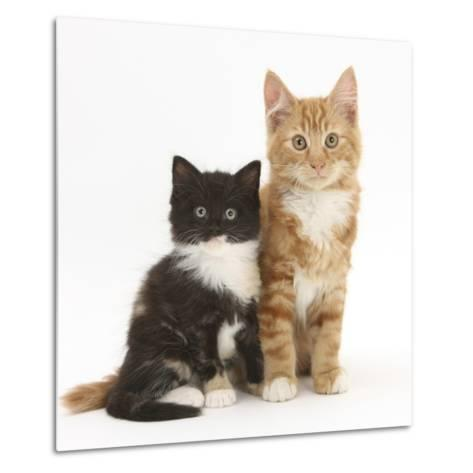 Ginger and Black-And-White Kittens-Mark Taylor-Metal Print