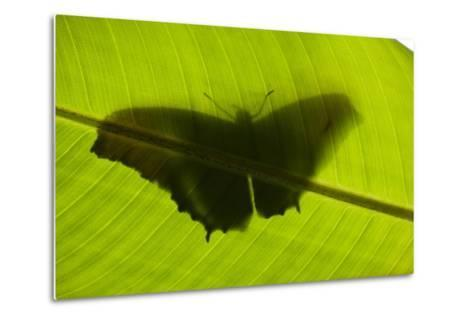 Butterfly, Costa Rica--Metal Print