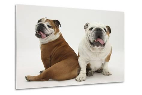 Two Bulldogs, Back to Back-Mark Taylor-Metal Print