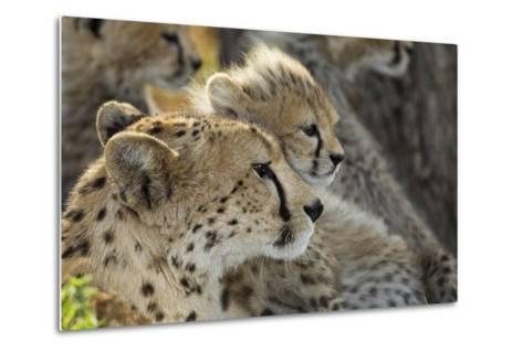 Cheetah Cub and Mother-Paul Souders-Metal Print