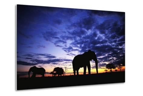 Elephant Silhouettes-Paul Souders-Metal Print