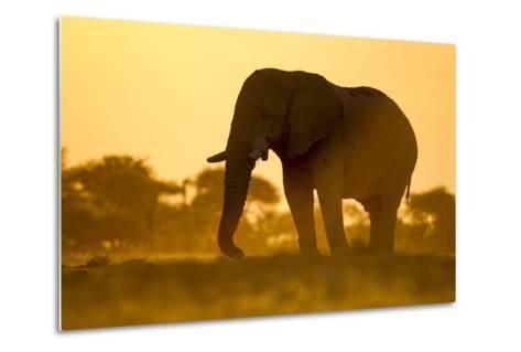 Elephant at Water Hole, Nxai Pan National Park, Botswana-Paul Souders-Metal Print