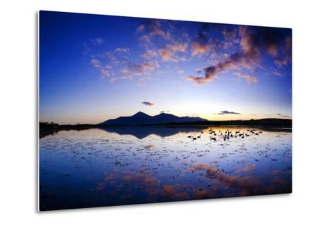 Swans at Dusk on Dundrum Bay, Mournes, County Down-Chris Hill-Metal Print