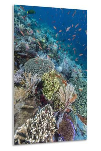 A Profusion of Coral and Reef Fish on Batu Bolong, Komodo Island National Park, Indonesia-Michael Nolan-Metal Print