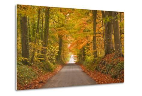 Autumn Colours in the Beech Trees on the Road to Turkdean in the Cotwolds-Julian Elliott-Metal Print