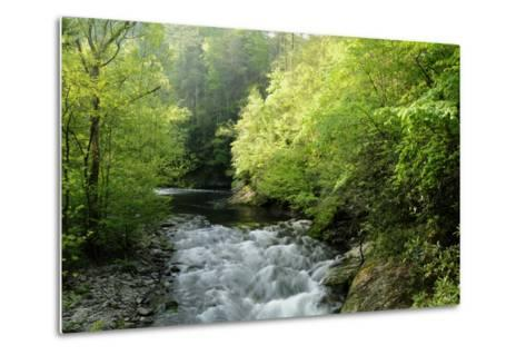 View of Laurel Creek Early on a Spring Morning-Darlyne A^ Murawski-Metal Print