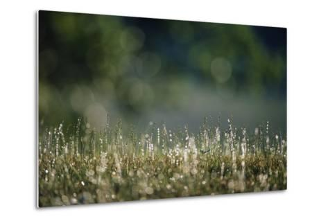 Morning Dew on Grass-Paul Souders-Metal Print