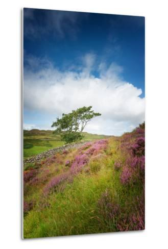 One of These Days-Philippe Sainte-Laudy-Metal Print