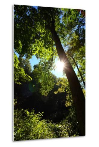 Back-Lit Midsummer Trees with Green Leaves and Blue Sky-George Grall-Metal Print