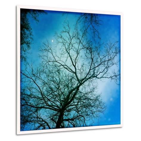 The Moon Behind a Bare Sycamore Tree-Skip Brown-Metal Print