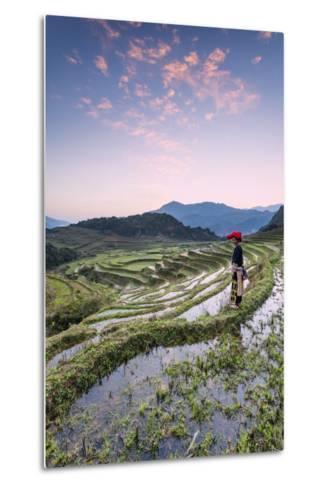 Vietnam, Sapa. Red Dao Woman on Rice Paddies at Sunrise (Mr)-Matteo Colombo-Metal Print