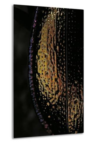 Carabus Hispanus (Ground Beetle)-Paul Starosta-Metal Print