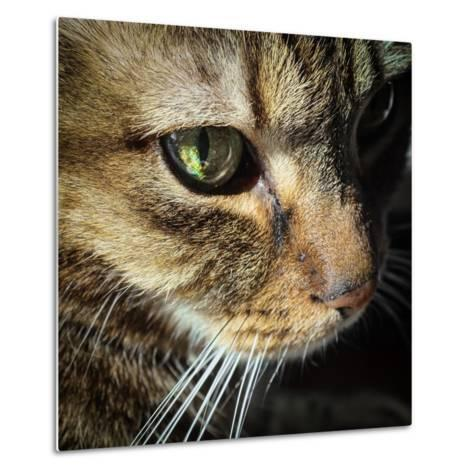 Close Up of the Eye and Face of a Pet Tabby Cat, in Sunlight Through a Window-Amy and Al White and Petteway-Metal Print