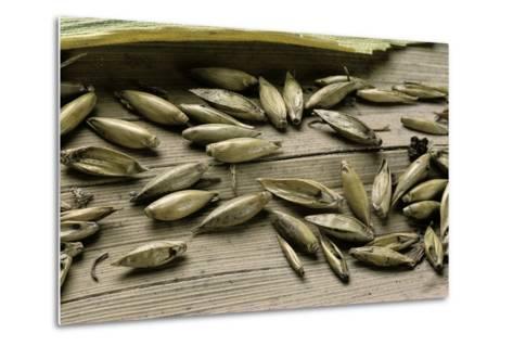 Bambusa Arundinacea (Bamboo) - Seeds-Paul Starosta-Metal Print