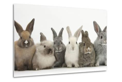 Six Baby Rabbits in Line-Mark Taylor-Metal Print