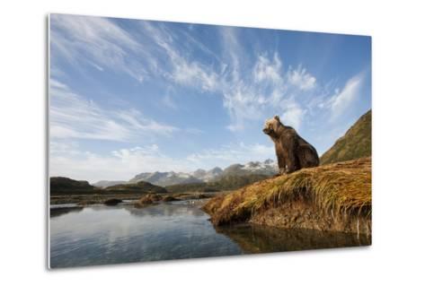 Brown Bear and Mountains, Katmai National Park, Alaska--Metal Print