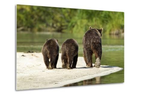 Brown Bear and Cubs, Katmai National Park, Alaska--Metal Print