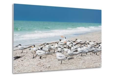 Seagulls on the Beach-Philippe Hugonnard-Metal Print
