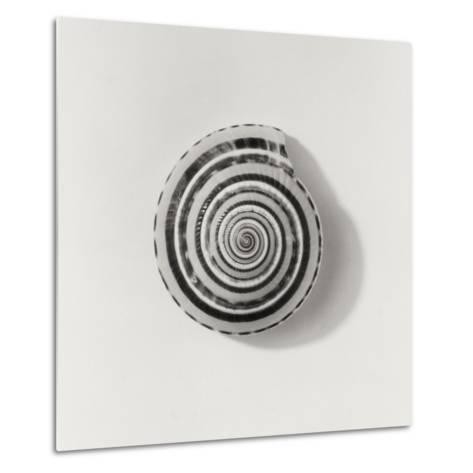Seashell-Graeme Harris-Metal Print