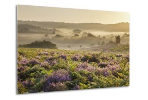 New Forest Heathland with Ling (Calluna Vulgaris) and Bell Heather (Erica Cinerea) Hampshire, UK-Guy Edwardes-Metal Print