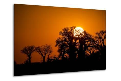 Sunrise at Baines Baobabs, Nxai Pan National Park, Botswana-Paul Souders-Metal Print