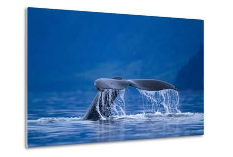 Humpback Whale, Alaska--Metal Print