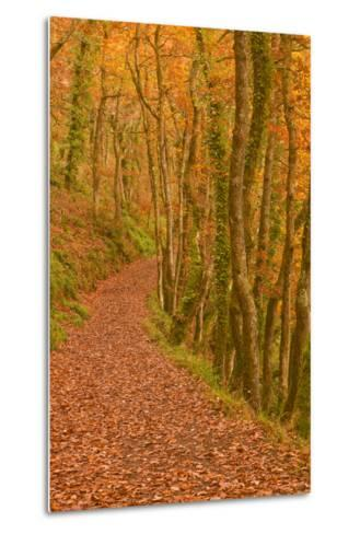 Hannicombe Wood Near to Fingle Bridge-Julian Elliott-Metal Print