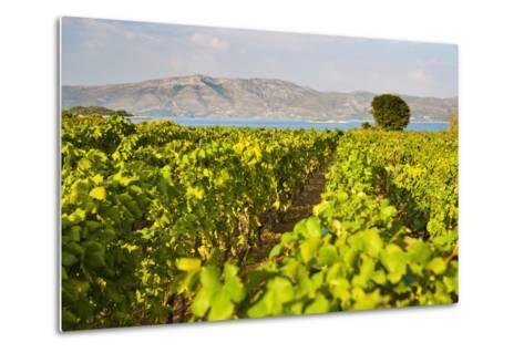 Vineyard, Lumbarda, Korcula Island, Dalmatian Coast, Adriatic, Croatia, Europe-Matthew Williams-Ellis-Metal Print