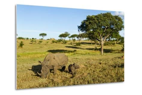 Black Rhino, Sabi Sabi Reserve, South Africa-Paul Souders-Metal Print