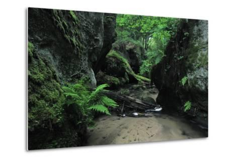 Halerbach - Haupeschbach Flowing Between Moss Covered Rocks with Ferns (Dryopteris Sp.) Luxembourg- Tønning-Metal Print
