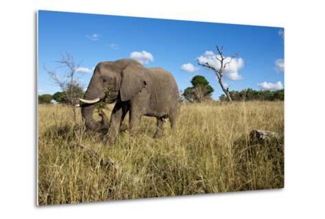 Elephant, Sabi Sabi Reserve, South Africa-Paul Souders-Metal Print