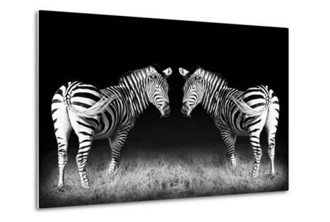 Black and White Mirrored Zebras-Sheila Haddad-Metal Print