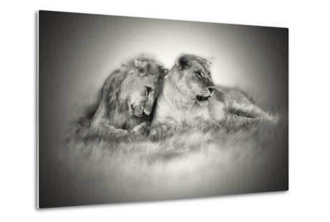 Lioness and Son Sitting and Nuzzling in Botswana Grassland, Africa-Sheila Haddad-Metal Print