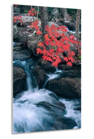 Jordan Stream in Autumn I, Maine Coast--Metal Print